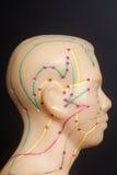 人头医疗针灸模型  库存图片