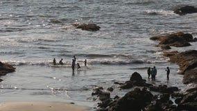 人们获得乐趣在海滩 股票视频