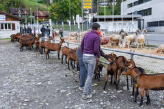 人们观看和谈论在施坦斯山羊市场上  库存图片