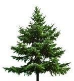 仅有的圣诞树 免版税库存图片