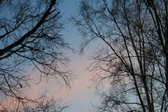 仅有的日落结构树 免版税库存图片