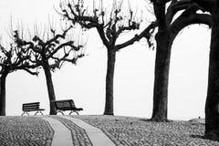 仅有的结构树冬天 图库摄影