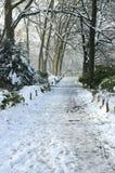 仅有的结构树冬天 免版税库存照片