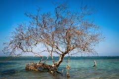 仅有的结构树在热带蓝色海运 免版税库存照片