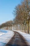 仅有的结构树行除一条乡下公路以外的在冬天 图库摄影
