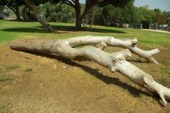 仅有的结构树 图库摄影