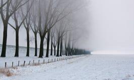 仅有的薄雾早晨行结构树 免版税库存图片