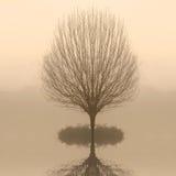 仅有的黎明雾结构树 免版税图库摄影
