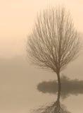 仅有的黎明雾结构树 库存图片