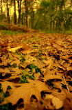 今晚森林 库存图片