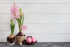 仍然复活节生活 在一个罐和复活节彩蛋的桃红色风信花在白色背景的巢 库存图片