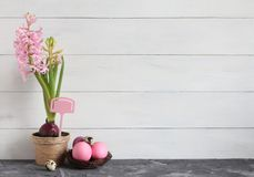 仍然复活节生活 在一个罐和复活节彩蛋的桃红色风信花在白色背景的巢 库存照片