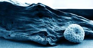 仍然珊瑚漂流木头寿命 库存照片