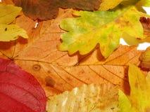 仍然秋天生活 库存照片