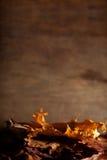 仍然秋季寿命 库存图片