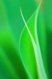 仍然绿色寿命 免版税库存照片