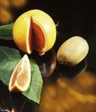 仍然葡萄柚生活 库存照片