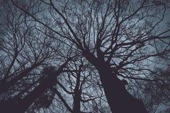 从一个低角度视图的光秃的树 库存图片