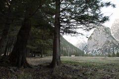 从一个森林的阿尔卑斯在瑞士 库存照片
