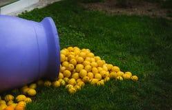 从一个紫色花瓶,装饰在芒通,柠檬城市,法国溢出的堆柠檬 库存图片
