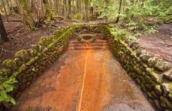 从一个线索的温泉在更加多雨的Mt 库存图片