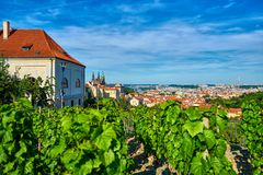 从一个葡萄园的看法俯视有Hradcany城堡和圣的Vitus的小山的布拉格 库存图片