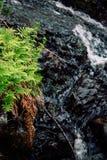 从一条小河的流动的水在有蕨和叶子的c苏格兰 免版税库存图片