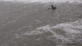 从一条拥挤河的水充斥了树 股票视频