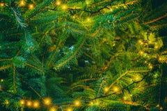 从一棵杉树的背景与彩色小灯 免版税图库摄影