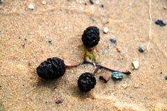 从一棵树的年轻枝杈在一个黄色沙滩,背景 库存图片