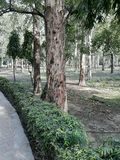 从一棵美丽的树的5步 免版税库存照片