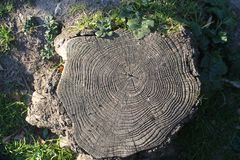 从上面削减树干视觉 免版税库存图片