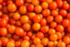 从上面被拍摄的新近地被采摘的红色西红柿 免版税库存图片