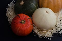 从不同的多彩多姿的南瓜的秋天安排 免版税库存照片