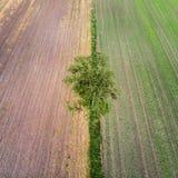 从了不起的高度采取的有一个角度一棵唯一树的鸟瞰图在两个不同农田区域边界在德国在G附近 库存照片