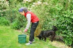 从事园艺与博德牧羊犬狗队伙伴朋友的妇女 库存照片