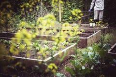 从事园艺和种植在季节开始  免版税库存照片