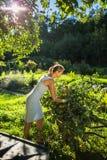 从事园艺在她的庭院里的俏丽,少妇 图库摄影
