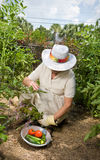 从事园艺她的菜妇女 免版税库存照片