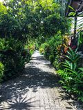 从事园艺热带 免版税库存照片