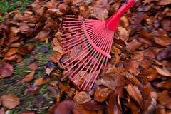 从事园艺的叶子犁耙 免版税库存图片