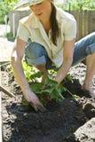 从事园艺的妇女年轻人 图库摄影