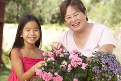 从事园艺的孙女祖母一起 库存照片