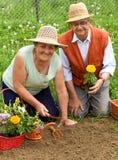 从事园艺的愉快的健康前辈 库存图片