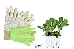 从事园艺的手套工厂 免版税库存图片