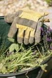从事园艺的手套 库存照片