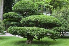 从事园艺的结构树 免版税库存照片