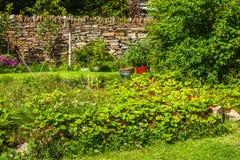 从事园艺的草莓 奥克尼,苏格兰 免版税库存照片