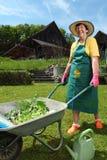 从事园艺种植蔬菜的她 免版税图库摄影
