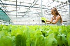 从事园艺自温室的年轻妇女 免版税库存照片